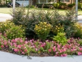 HH Gardens-9